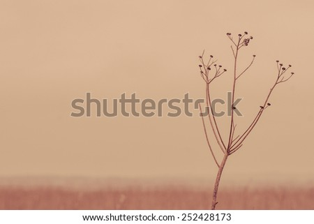 Withered flower in silent autumn scenery