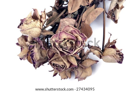 withered flowers - stock photo