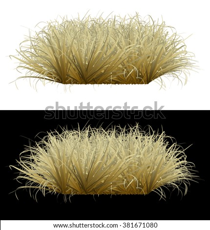 Withered grass on an isolated background - stock photo
