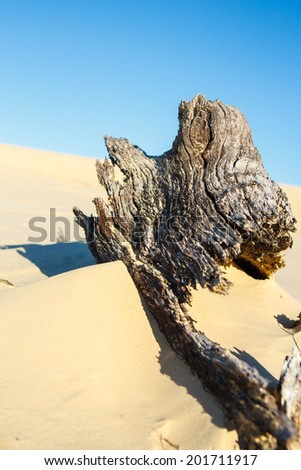 Withered tree in desert