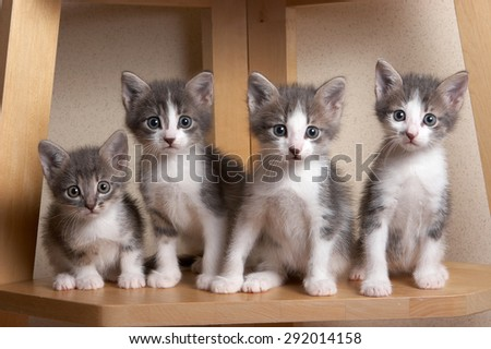 Woesome, pitiful kittens with touching eyes  sitting and looking at the camera - stock photo