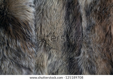 wolf fur texture of the gray wolf skin - stock photo