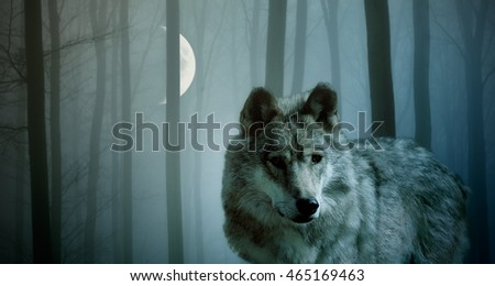 Wolf in the dark forest with Moon