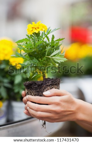 Woman about to put plant into pot in garden center - stock photo