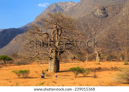 Woman and child walking through the baobab valley in Tanzania - stock photo