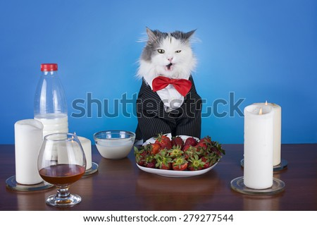 woman and her cat having dinner by candlelight - stock photo