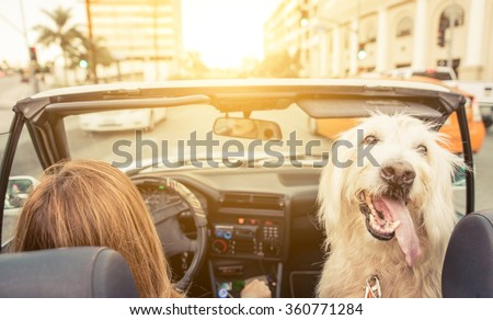 Woman and her dog driving on the car in Los angeles. dog watching behind and enjoying the wind in the fur. Animals and people concept - stock photo