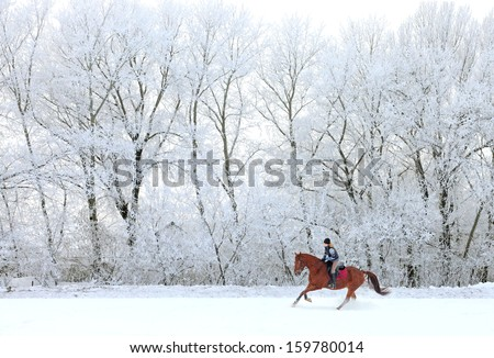 Woman and her horse cantering in fresh snow  in Christmas morning - stock photo