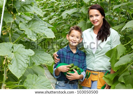 Woman and her son with crop of cucumbers in the greenhouse