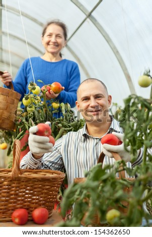 Woman and man in tomato plant  at hothouse - stock photo