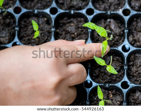 Woman are used to pull the plants growing in compacted