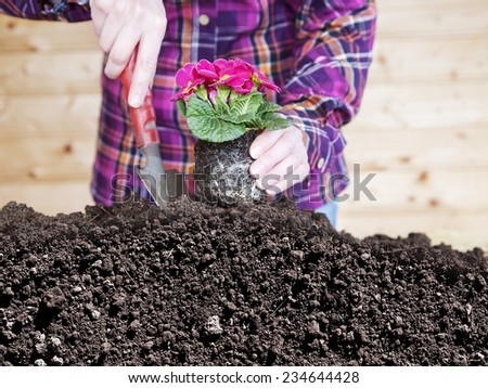 Woman at transplanting of flowers - stock photo