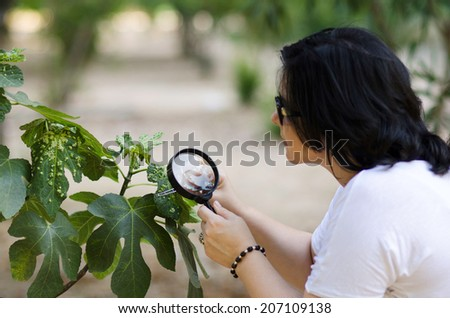 Woman botanist finding leaf galls on the figs tree with magnifying glass - stock photo
