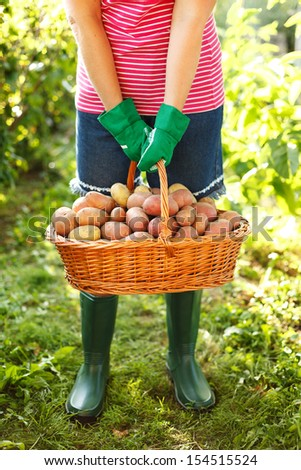 Woman carrying a full basket of potatoes in garden - stock photo
