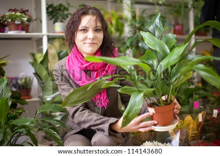 Woman chooses aspidistra in a flower shop - stock photo