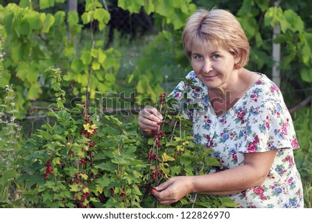 Woman collecting berries from a bush of red currant.