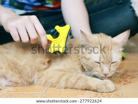 Woman combing fur of a red cat - stock photo