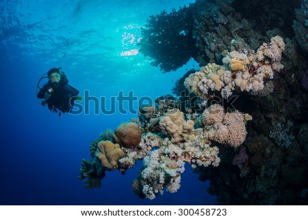 Woman diver explores the corals on the wall at Fury Shoals, Red Sea, Egypt