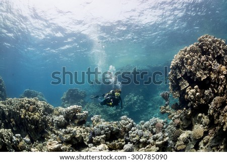 Woman diver on the reef, St John's Caves, Red Sea, Egypt - stock photo