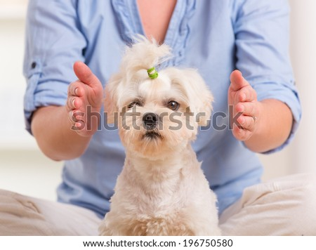 Woman doing Reiki therapy for a dog, a kind of energy medicine. - stock photo