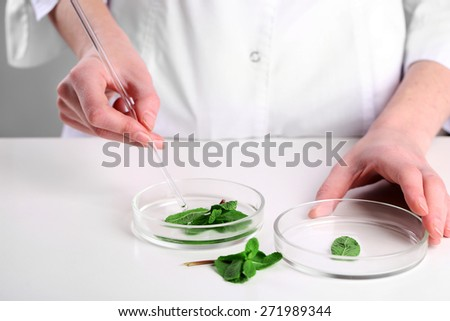 Woman examining green plant in laboratory, close up - stock photo