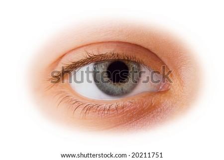 Woman eye isolated on white background - stock photo