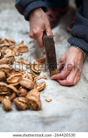 Woman farmer crushing walnuts with a hammer outdoor - stock photo