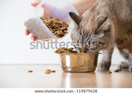 Woman feeding hungry pet cat - stock photo