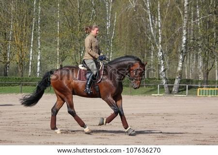 Woman galloping on latvian breed bay horse - stock photo