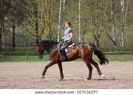 Woman galloping on latvian breed bay horse