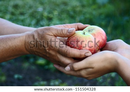 Woman giving girl apples from hands to hands in garden close up                             - stock photo