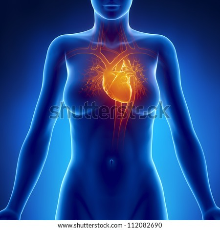 Woman glowing heart anatomy     **** Also as footage available in my portfolio - stock photo