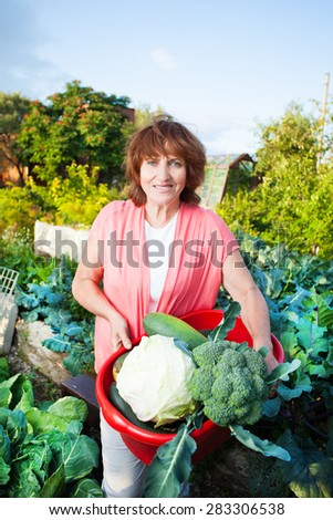 Woman grows harvest in the garden. Senior with vegetables - stock photo