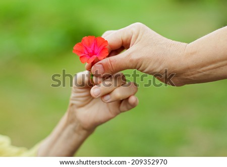Woman hand giving a red flower to an elderly lady - stock photo