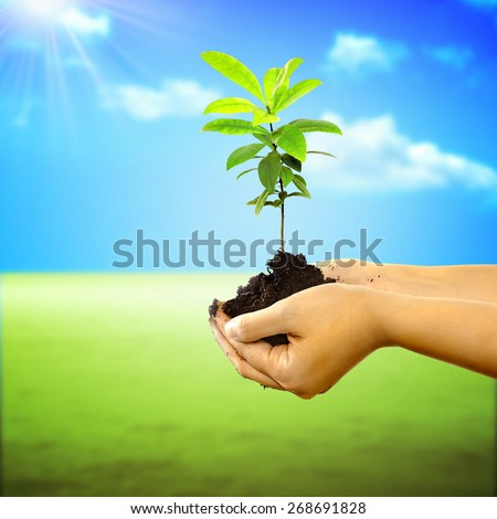 Woman hand holding a new tree over nature background. Concept about growing a new tree to save the world - stock photo