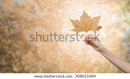 Woman hand holding an autumn leaf - stock photo