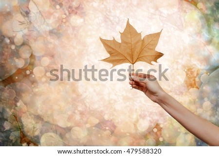 Woman hand holding an autumn leaf
