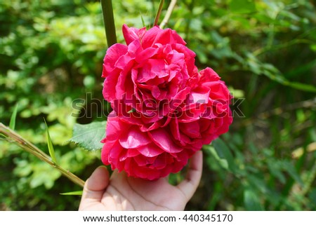 Woman hand holding red roses - stock photo