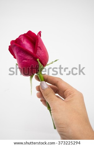 woman hand holding rose  - stock photo