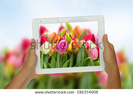 Woman hand holding tablet  against spring flowers  background - stock photo