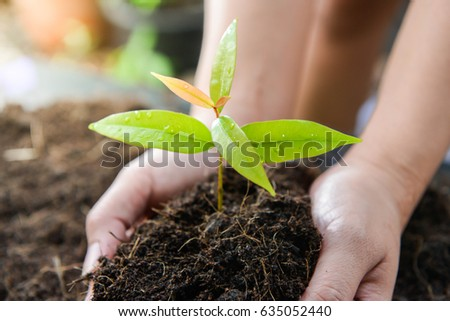 Woman hand is planting the tree on the ground
