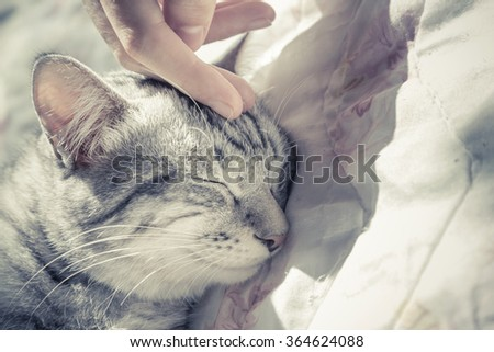 woman hand petting a cat head, love to animals, vintage photo - stock photo
