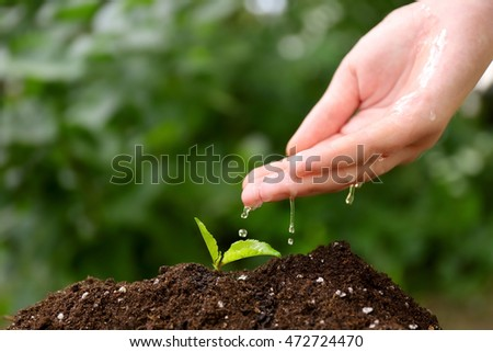 Woman hand watering plant in garden