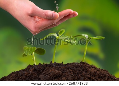 Woman hand watering young plants in pile of soil