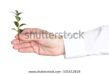 Woman hand with plant isolated on white - stock photo