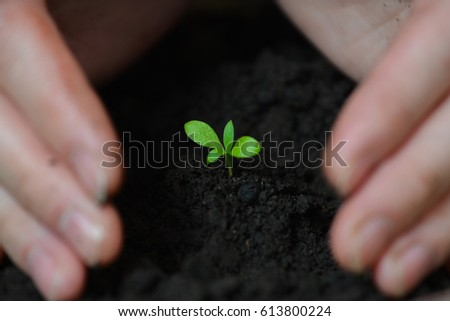 Woman hands are planting seedlings into the soil, ecology and earth day concept.