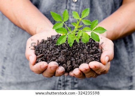 Woman hands holding a green young plant - stock photo