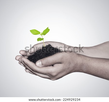 Woman hands holding green seedling with soil  - stock photo