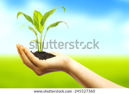 Woman hands holding plant over nature background  - stock photo
