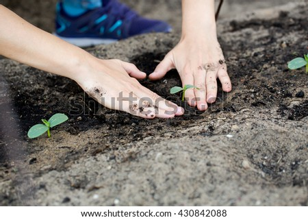 Woman hands planting the young plant while working in garden. - stock photo